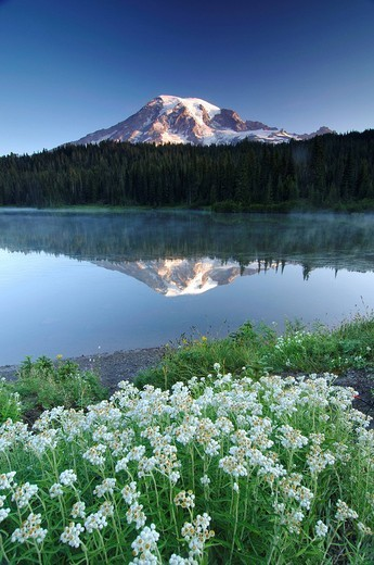 Mount Rainier reflected in a lake, flower meadow at front, Mount Rainier National Park, Washington, USA, North America : Stock Photo