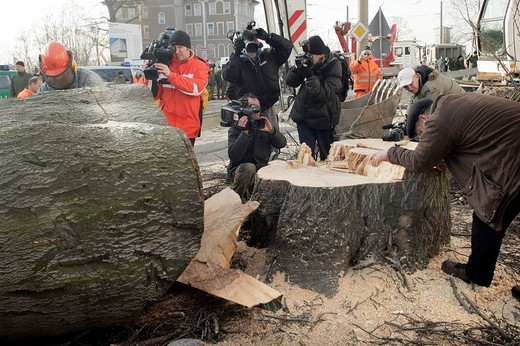 Stock Photo: 1848-155610 Robin Wood environmental activists were removed from a 300_year_old tree that was chopped down in order to build new bridge Waldschloesschenbruecke in Dresden, Saxony, Germany