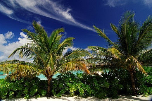 Clouds and palm trees, Full Moon Resort, The Maldives, Indian Ocean : Stock Photo