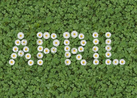 Stock Photo: 1848-156874 Month April with daisies