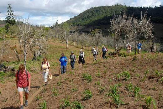 Stock Photo: 1848-157325 Group of hikers in the Usambara Mountains Tanzania
