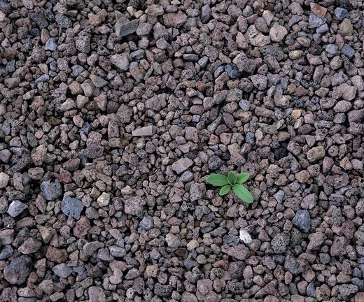 Stock Photo: 1848-157880 Solitary green plant growing out of igneous rock