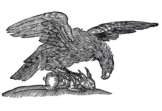 Woodcut, eagle Aquila with rabbit as prey, from: Conrad Gesner, Historia Animalum, 1551, Germany, Europe, from: Conrad Gesner, Historia Animalum, 1551, Germany, Europe : Stock Photo