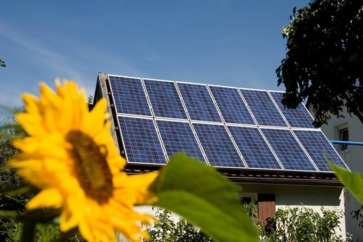 Solar cells completely covering small roof, sunflower blossom : Stock Photo