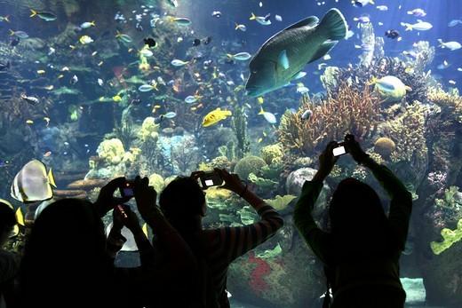 ESP, Spain, Valencia : Europes biggest aquarium, Ciudad de las Artes y de las Ciencias : Stock Photo