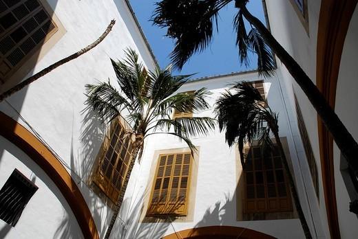 Palm trees in an inner courtyard, a Patio of the Academy of Fine Arts, Circulo de Bellas Artes, in the former city palace Casa Balaguer, Cal Marques del Requer, Palma de Mallorca, Mallorca, Balearic Islands, Spain, Europe : Stock Photo