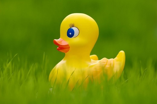 Rubber ducky in the grass : Stock Photo