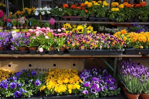 Flower stall, Viktualienmarkt Market, Munich, Bavaria, Germany : Stock Photo