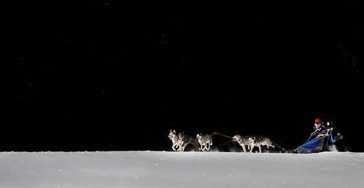 Dog_sled team, Unterjoch, Allgaeu, Bavaria, Germany, Europe : Stock Photo
