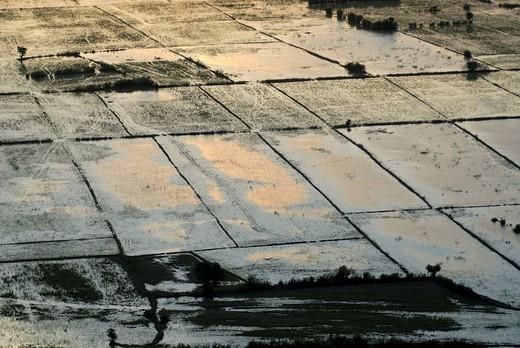 Stock Photo: 1848-175649 Rice fields, Angkor, Siem Reap, Cambodia, Asia