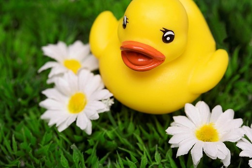 Stock Photo: 1848-183537 Yellow rubber duck on an artificial flower meadow