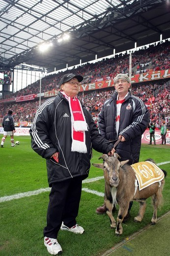 Hennes the Billy Goat, mascot for 1. FC Koeln, 2nd Bundesliga, German Second Division, March 9, 2008 match between 1. FC Koeln and TuS Koblenz at Rheinenergie Stadium, Cologne, North Rhine_Westphalia, Germany : Stock Photo