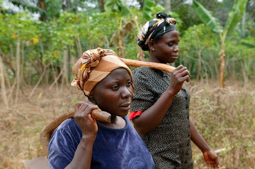 Women working in a maniok field, Bamenda, Cameroon, Africa : Stock Photo