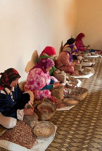 Production of Argan oil by Moroccan women, Morocco, Africa : Stock Photo