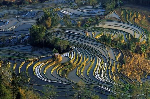Rice terraces at Tiger´s Mouth, Yuanyang, Yunnan, China, Asia : Stock Photo