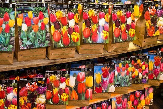 Tulip bulbs, Floating Flower Market, Singelgracht, Amsterdam, Netherlands, Europe : Stock Photo