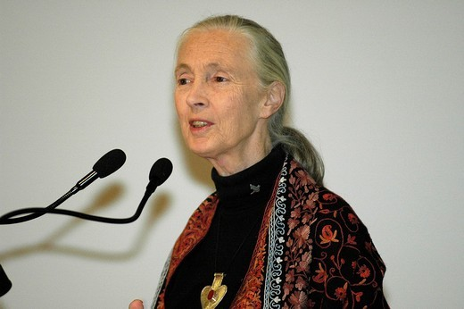 Stock Photo: 1848-199457 Chimpanzee researcher and advocate Jane Goodall, UN Messenger of Peace giving a speech in Innsbruck, Austria