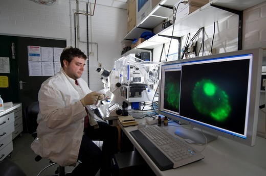 Stock Photo: 1848-199517 Stem cell research, Max Planck Institute for Molecular Genetics, laboratory technician observing nerve cells through a microscope, Berlin, Germany