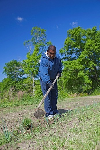 Donald Travis chops weeds with a hoe on his farm, he is president of the Indian Springs Farmers Association, a marketing cooperative of African_American family farmers, Hattiesburg, Mississippi, USA : Stock Photo