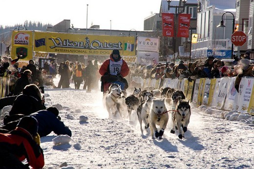 Stock Photo: 1848-203194 Mushers start with their teams at the Yukon Quest dog sled race, Whitehorse, Yukon Territory, Canada