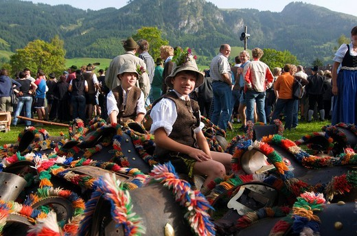 Cattle seperation in Bad Hindelang, Allgaeu, Bavaria, Germany, Europe : Stock Photo