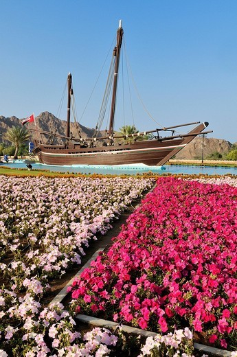 Renovated dhow Sohar, with which Irishman Timothy Severin sailed from Muscat to China in 1980, at Al Bustan Roundabout, Muscat, Sultanate of Oman, Arabia, Middle East : Stock Photo