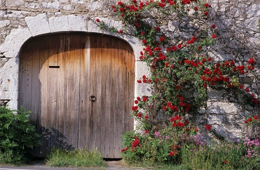 Stock Photo: 1848-209005 Red roses at wooden door, France, Languedoc_Roussillon