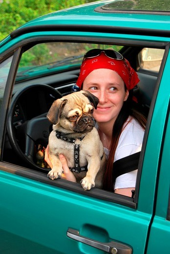 Travelling with a dog, young pug and young woman with a red headscarf and sunglasses, looking out of the window : Stock Photo