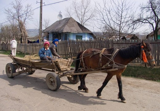 Horse drawn carriage, Gulia, Romania : Stock Photo