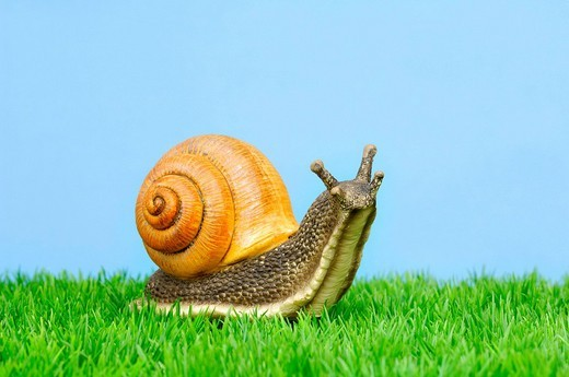 Porcelain Roman snail, garden decoration : Stock Photo