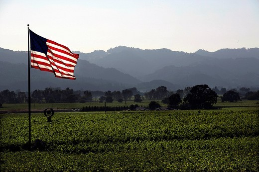 Stock Photo: 1848-220278 American flag in the vineyards of Napa Valley, California, USA, North America