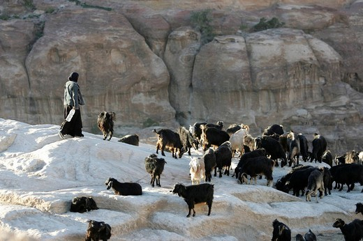 Stock Photo: 1848-228819 Goat herd near the city of Wadi Musa, Petra, Jordan