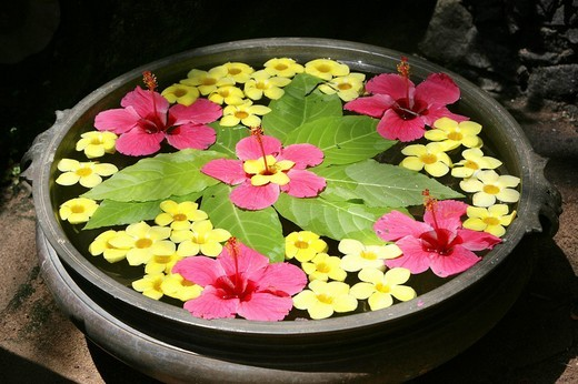 Floral arrangement floating in water, Somatheeram Ayurveda Resort, traditional Ayurvedic medicine spa resort, Trivandrum, Kerala, India, Asia : Stock Photo