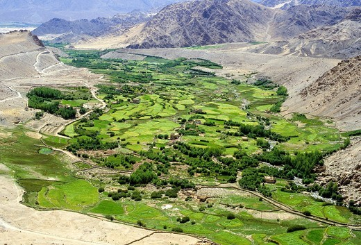 Aerial shot of an agricultural area, barley, near Leh, Indus River Valley, Himalayas, Ladakh, India : Stock Photo