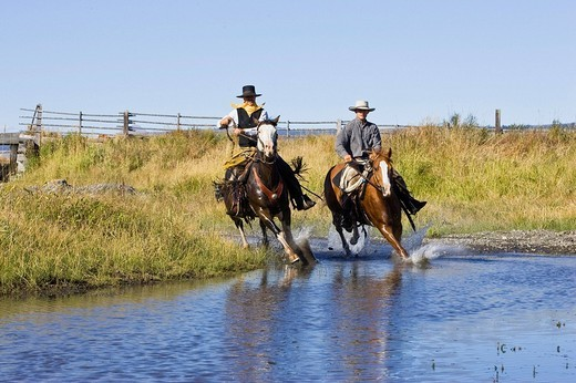 Cowboys riding in water, Oregon, USA : Stock Photo