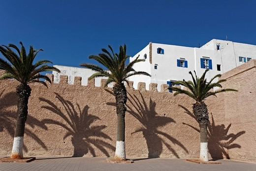 Palm trees casting shadows against an old city wall, Essaouira, Morocco, Africa : Stock Photo