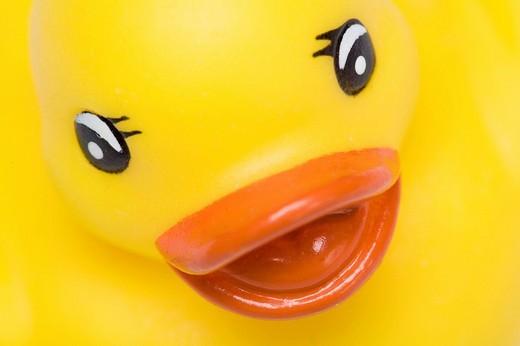 Yellow rubber duck : Stock Photo