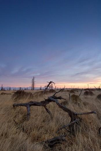 Stock Photo: 1848-245200 Dead trees, High Fens Hautes Fagnes, Hohes Venn moorland region, Belgium/Germany
