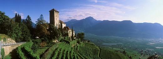 Schloss Lebenberg Castle, vineyard, Tscherms or Cermes, Trentino, Alto Adige, Italy, Europe : Stock Photo