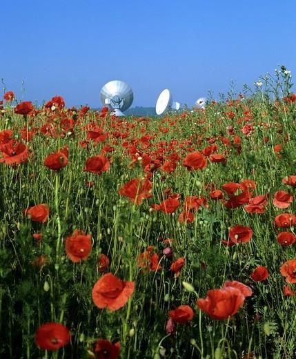 Stock Photo: 1848-248969 Antennas of the Satellite Earth Station Raisting, poppy field, Upper Bavaria, Bavaria, Germany