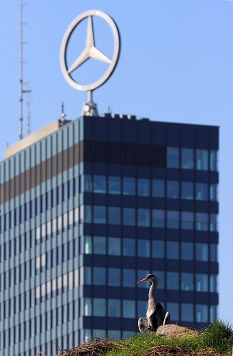 Grey Heron Ardea cinerea, in front of a modern building with the mercedes star on top, Berlin, Germany, Europe : Stock Photo