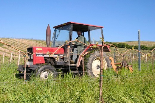 Stock Photo: 1848-251229 Winegrowing estate