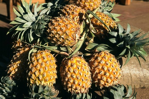 Stock Photo: 1848-253251 Pineapples, Sri Lanka, South Asia
