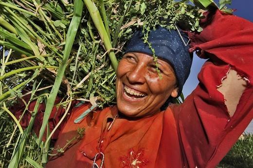 Fellah, Beni Suef, Central Egypt, Africa : Stock Photo
