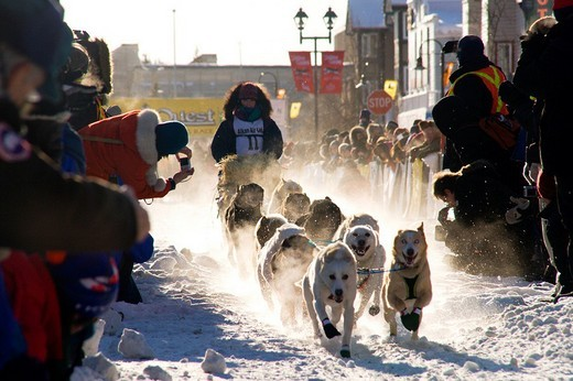 Mushers start with their teams at the Yukon Quest dog sled race, Whitehorse, Yukon Territory, Canada : Stock Photo