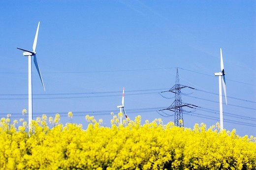 Altenative enregy sources: Canola and wind energy , : Stock Photo