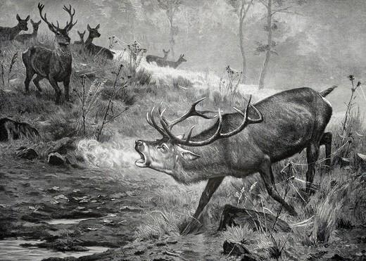 Der Platzhirsch, woodcut depicting a deer, from Moderne Kunst in Meisterholzschnitten 1903 : Stock Photo