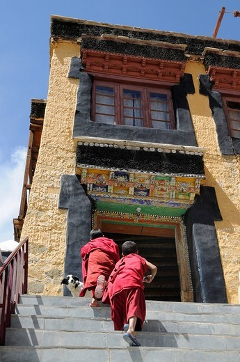 Stock Photo: 1848-257809 Thikse Monastery, novice climbing the stairs to the oratory, Ladakh, Jammu and Kashmir, North India, Himalayas, Asia