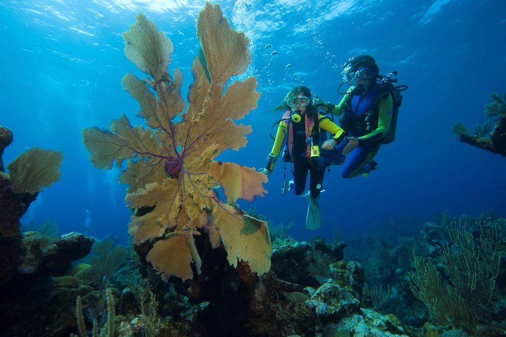 Tourists scuba diving in the Caribbean, Honduras, Central America : Stock Photo