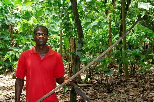 Stock Photo: 1848-263276 Cocoa farmer carrying a machete and picker, known as go_to_hell, for harvesting cocoa fruits, Mampong, Ghana, West Africa